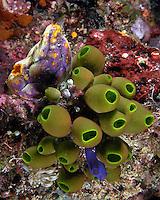Tunicate Medley