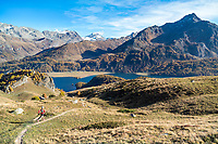 Trail running above Grevasalvas and the Silsersee, near Maloja, in the Engadin, during the fall colors. Switzerland
