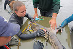 Earthwatch Team Measuring Leopard Shark