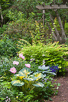 Trellis, Paeonia Bowl of Beauty, Kolkwitzia, Physocarpus Coppertina, birch betula trees, Hosta Great Expectations in spring, Nemesia Elph Dark Blue . Note that Physocarpus 'Coppertina' aka Mindia is called Physocarpus opulifolius 'Diable D'Or' aka Mindia in Europe.