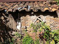 Brick shack in grapefruit orchard, Paraguari, Paraguay