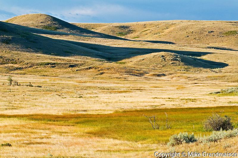 native prairie grasslands.  (West Block) <br /> Grasslands National Park<br /> Saskatchewan<br /> Canada