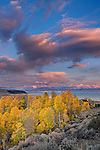 A photo of fall yellow aspen trees with sunset clouds above Mono Lake in California