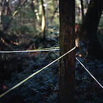 Plastic tape indicates the areas that have been searched for bodies in Aokigahara Jukai, better known as the Mt. Fuji suicide forest, which is located at the base of Japan's famed mountain west of Tokyo, Japan.