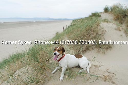 Brendan, Sand Dunes Harlech Gwynedd 2008