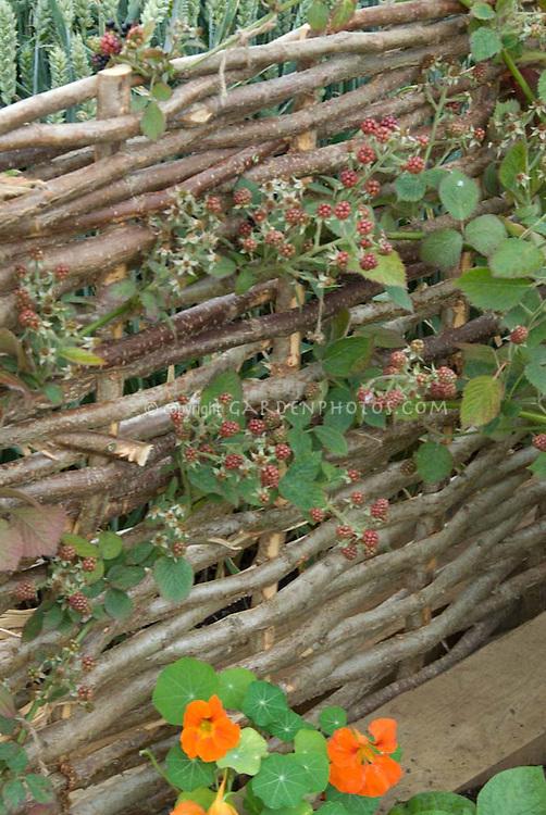 Jww1885 Dng Plant Flower Stock Photography Gardenphotos Com
