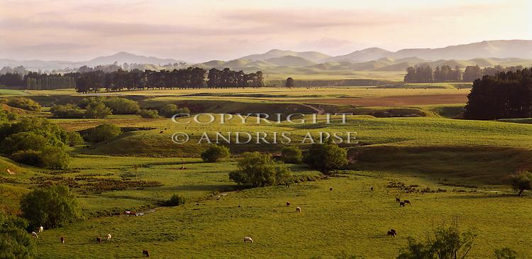 Hawkes Bay farmland. New Zealand.