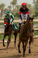 ARCADIA, CA  APRIL 7:   #6 Fatale Bere, ridden by Joel Rosario, return to the connections after winning the Providencia Stakes (Grade lll) on April 7, 2018 at Santa Anita Park Arcadia, CA. (Photo by Casey Phillips/ Eclipse Sportswire/ Getty Images)