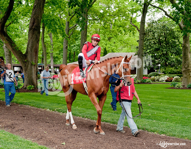 Ile St. Molly before The Our Mims Stakes at Delaware Park on 5/18/13