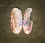 A clam shell on sand