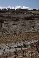Europe/France/Languedoc-Roussillon/66/Pyrénées -Orientales/Riversaltes : Vignoble et Massif du Canigou