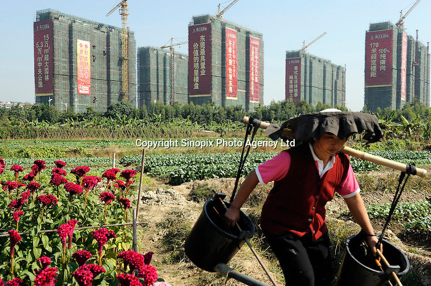 A farmer working in vegetables field in front of newly constructed apartment towers, Dongguang, Guangdong, China..30 Dec 2008