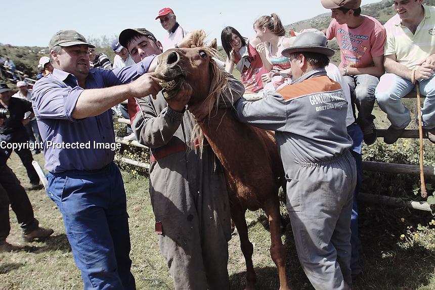fecha:26-06-2011 En Campo de Oso, Pastoriza, Lugo, Rapa das bestas. Es la primera rapa del verano en Galicia. Los caballos, libres en el monte durante el año, bajan al curro para ser marcados por sus propietarios.