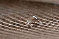 Wassertropfen auf einer Vogelfeder, Feder. Feder wird nicht nass, sondern der Wassertropfen perlt ab