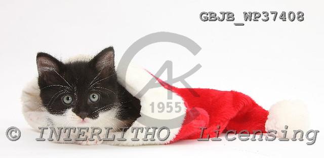 Kim, CHRISTMAS ANIMALS, photos, GBJBWP37408,#XA# stickers