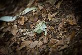 Menschliche Überreste, gefunden in einer verminten Gegend in der Nähe von Srebrenica. / Human remains found in a mined area near Srebrenica.
