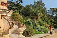 Le Domaine du Rayol:<br /> escalier menant &agrave; la terrasse de l'H&ocirc;tel de la Mer et le jardin des Canaries domin&eacute; par 2 dragonniers (Dracaena draco).