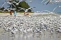 Terns, seagulls, birds on beach at Sanibel Island, Florida, USA. Photo by Debi Pittman Wilkey