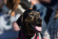 "The Wake Forest Demon Deacons invited fans to bring their dogs to ""Bark in the Park"" during the game against the Florida State Seminoles at David F. Couch Ballpark on April 16, 2016 in Winston-Salem, North Carolina.  The Seminoles defeated the Demon Deacons 13-8.  (Brian Westerholt/Four Seam Images)"