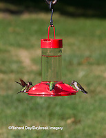 01162-12903 Ruby-throated Hummingbirds (Archilochus colubris) at Dr. JB's Hummingbird Feeder, Marion County, IL