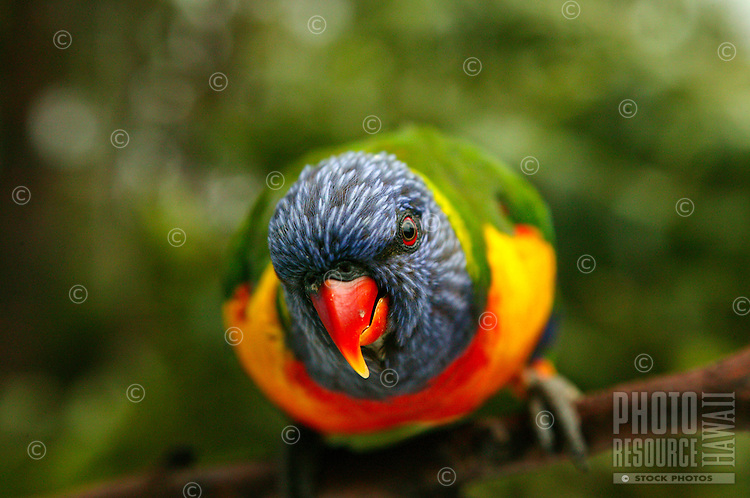 bird of beautiful vibrant colors perched in a tropical setting