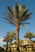 The Ritz-Carlton in Amelia Island, FL
