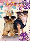 Alfredo, ANIMALS, dogs, photos+++++,BRTOXX02019CP,#a# Hunde, perros