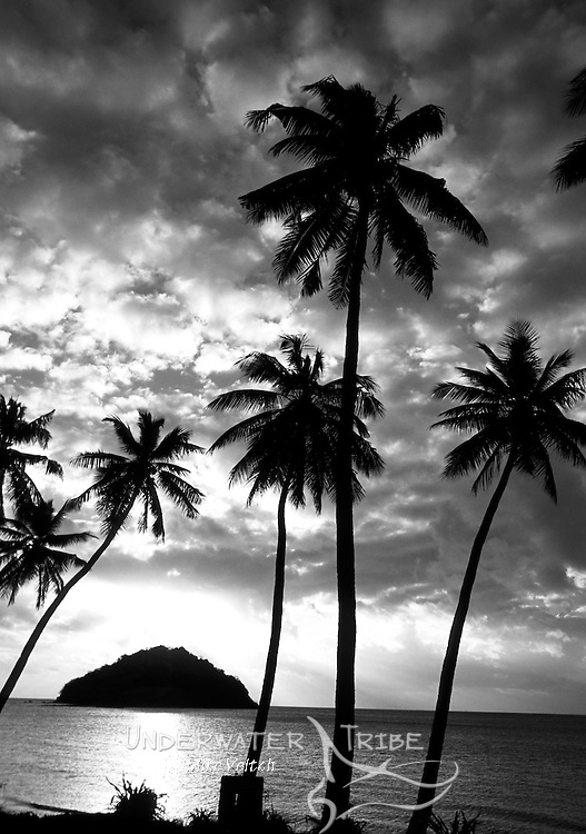 Sunset over palm trees, Fiji, Pacific Ocean