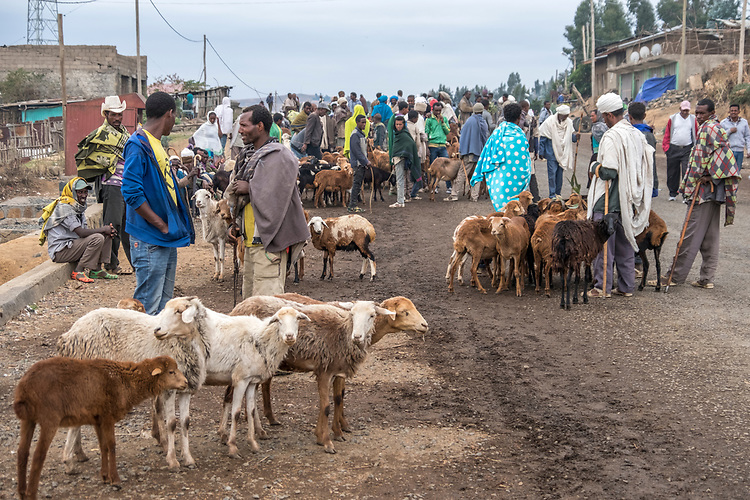 Villagers congregate in the middle of the road in Debark to buy and sell sheep.