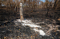 A burnt out forest in the Phnom Tnout Phnom Pok Wildlife Sanctuary, in northern Cambodia. Fires are set by farmers, loggers and local people looking to either capture wildlife or clear land for agriculture.