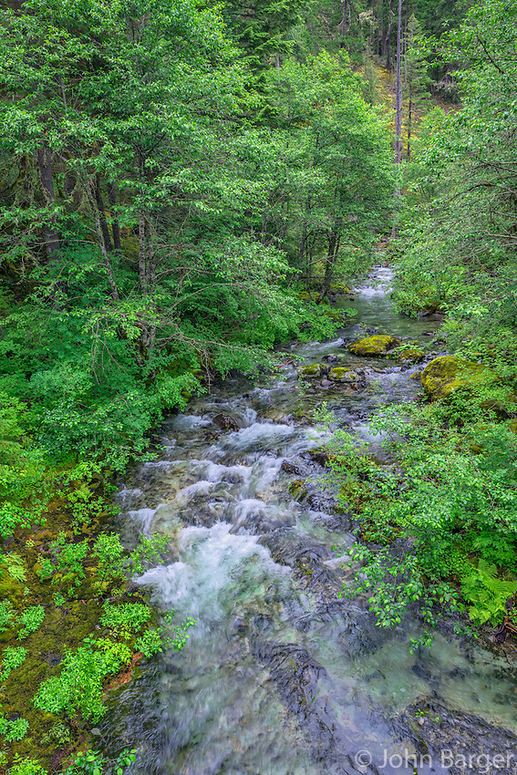 ORCAN_D127 - USA, Oregon, Willamette National Forest, Opal Creek Scenic Recreation Area, Battle Ax Creek with surrounding lush forest.
