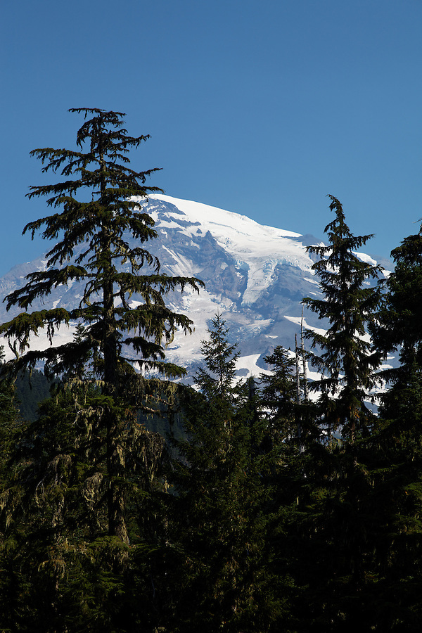 Mount Rainier framed by trees, Mount Rainier National Park, Washington, USA
