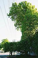 Image Ref: T013<br /> Location: Healesville<br /> Date of Shot: 9th November 2013
