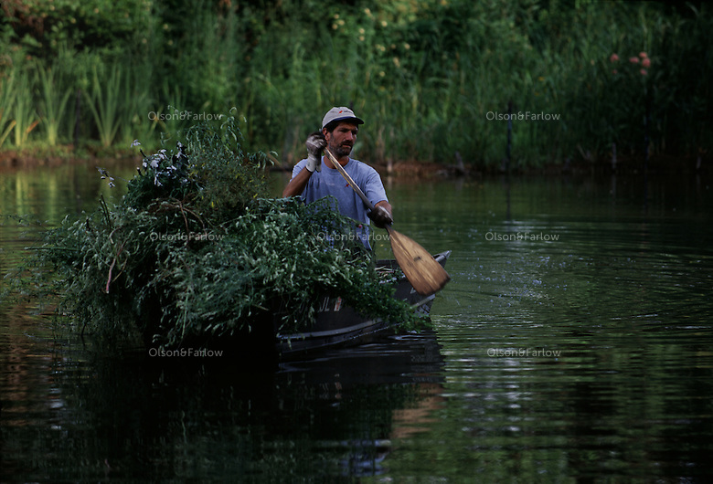 Invasive species are brought by boat to as restoration begins at the lagoon in Jackson Park in Chicago.