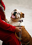 BULLDOG & OWNER at DOG SHOW
