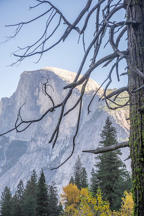 The branches of a dead conifer in Yosemite Valley creates this mosaic of distant Half Dome.