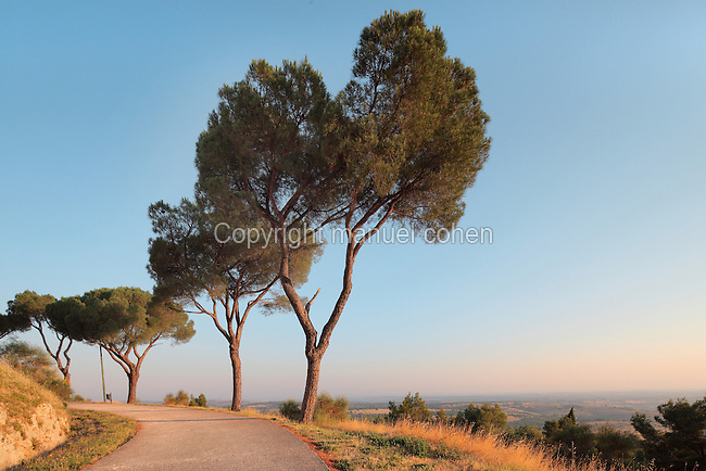 Country road in Andria, Puglia, Southern Italy. Picture by Manuel Cohen