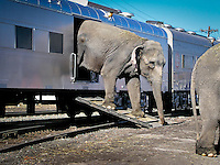 Circus Elephant arrives on train at East Rutherford, New Jersey, USA. Photo by Debi Pittman Wilkey
