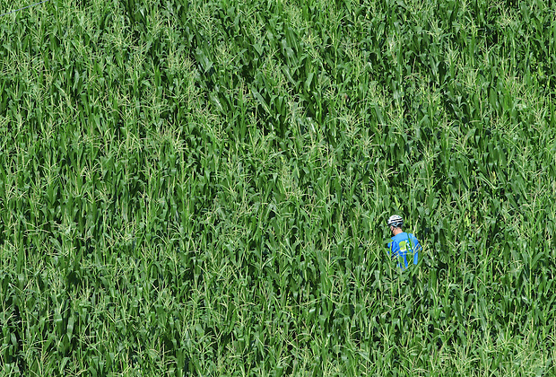 Nature calls for a lone RAGBRAI rider in a cornfield near Kesley.