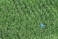 Nature calls for a lone RAGBRAI rider in a cornfield near Kesley.