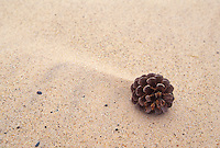 A pine cone in a sand drift on Twelvemile Beach in Pictured Rocks National Lakeshore near Grand Marais, Mich.