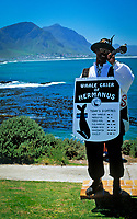 South Africa, Southern Cape, Hermanus: Whale cryer