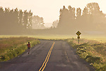 Skagit Valley, woman jogging, Fir Island, farmland, farms, sunrise, Skagit County, Washington State,