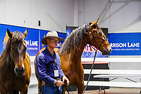 Demo Arena 2: Meet and Greet with Russell Higgins and his Liberty Horses. 2019 Equitana Auckland. ASB Showgrounds. Auckland. New Zealand. Saturday 23 November. Copyright Photo: Libby Law Photography