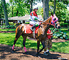 Diana's Comprise with Alexandra Bihari aboard in the paddock before the Longines International Ladies Fegentri Amateur race at Delaware Park on 6/8/15