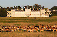 Great Britain, England, Bedfordshire, Woburn: Woburn Abbey and Deer Park, seat of the Duke of Bedford | Grossbritannien, England, Bedfordshire, Woburn: Woburn Abbey (Woburna), ein ehemaliges Kloster der Zisterzienser, ist heute Adelssitz des Duke of Bedford mit Park und Wildgehege