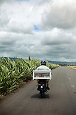 MAURITIUS, a man drives his moped through a rural landscape covered in sugarcane