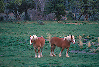 7928002693 two beautiful horses stand in a field near escalante utah