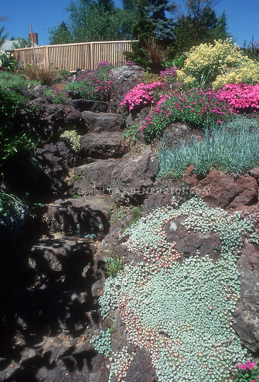 Rock garden with uneven stone steps, fence, blue sky, succulents, flowering plants, alpines, blooms and foliage, creeping in crevices