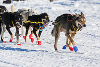 Mitch Seavey runs on Long Lake during the Restart of the 2016 Iditarod in Willow, Alaska.  March 06, 2016.